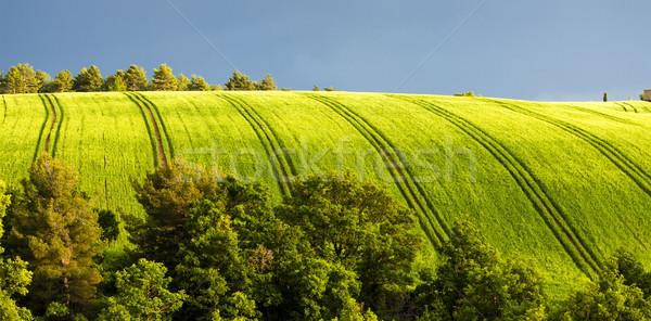 春 フィールド 木 高原 フランス ツリー ストックフォト © phbcz