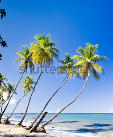 Norte costa caribbean árvore paisagem mar Foto stock © phbcz