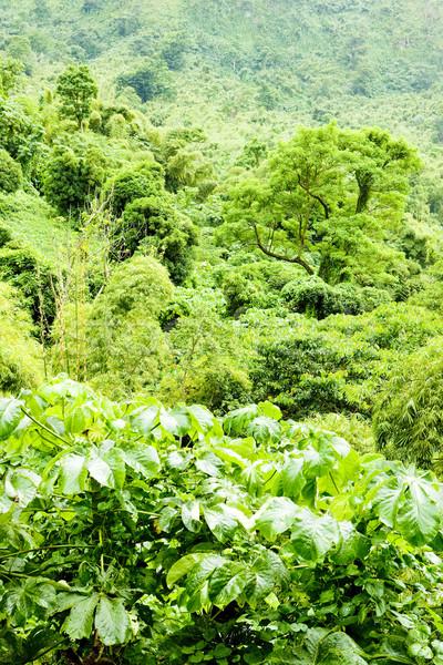 Grenada caribbean bos landschap reizen planten Stockfoto © phbcz