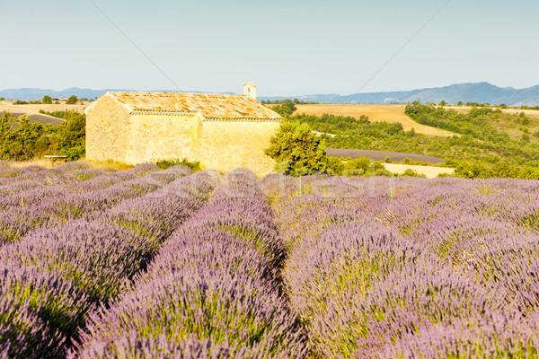 Capilla campo de lavanda meseta flor edificio campo Foto stock © phbcz