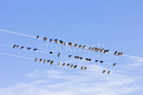 鳥 座って 線 ネバダ州 米国 ストックフォト © phbcz