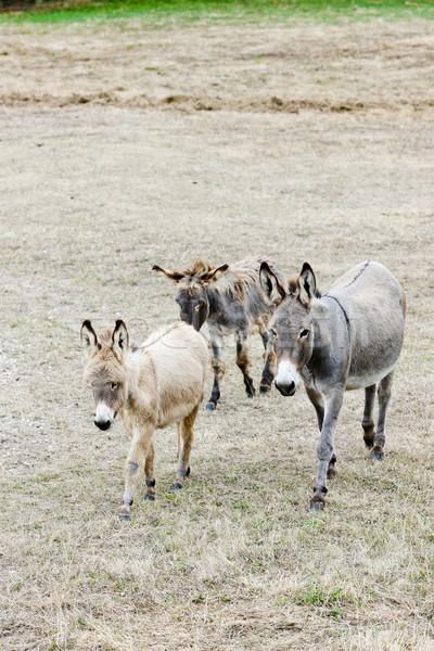 Spanyolország mezőgazdaság három kint emlős vidék Stock fotó © phbcz