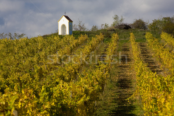 Stock photo: vineyard near Hnanice, Znojmo Region, Czech Republic
