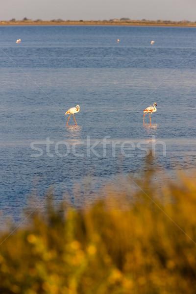 Fransa manzara kuş seyahat Avrupa flamingo Stok fotoğraf © phbcz