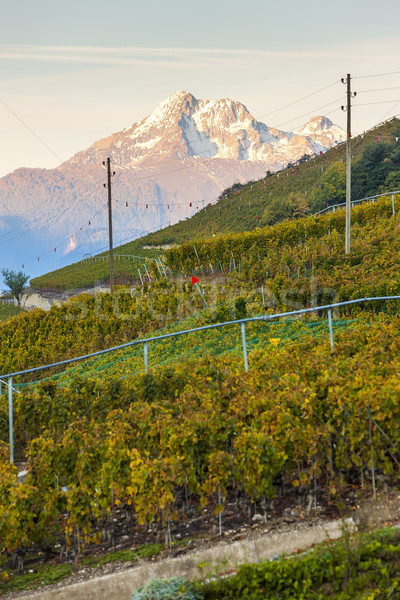 Сток-фото: регион · Швейцария · природы · путешествия · винограда · сельского · хозяйства