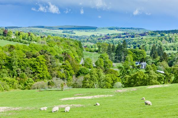 Hoogland Schotland landschap schapen weide natuurlijke Stockfoto © phbcz