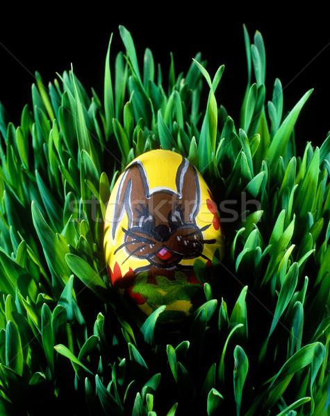 Húsvéti tojás gabona tojás tojások egy bent Stock fotó © phbcz