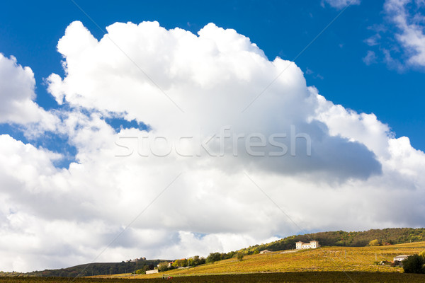 vineyards near Odenas, Beaujolais, Rhone-Alpes, France Stock photo © phbcz