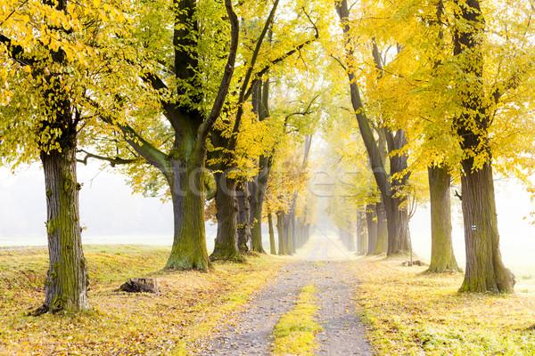 Sonbahar geçit ağaç sonbahar bitki yol Stok fotoğraf © phbcz