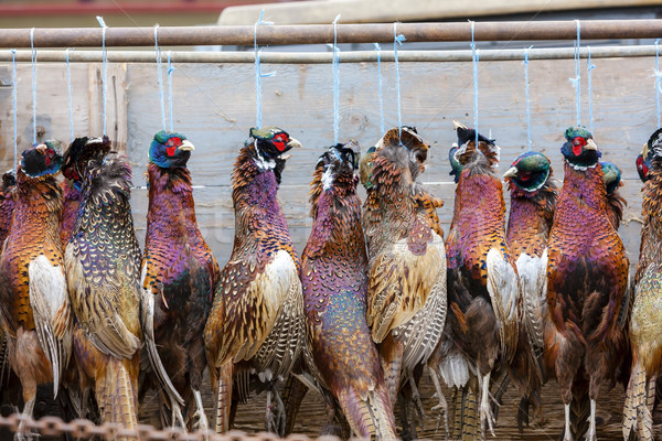 excludes of caught pheasants Stock photo © phbcz