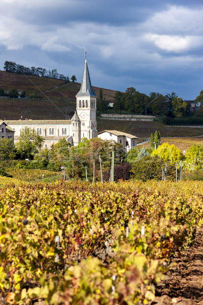Chenas with vineyard, Beaujolais, Rhone-Alpes, France Stock photo © phbcz