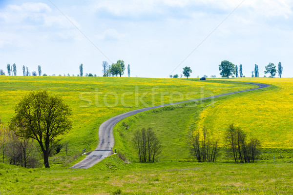 spring landscape with a road, Czech Republic Stock photo © phbcz