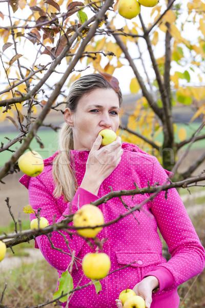 woman with autumnal apple tree Stock photo © phbcz