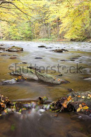 harvesting pond, Czech Republic Stock photo © phbcz