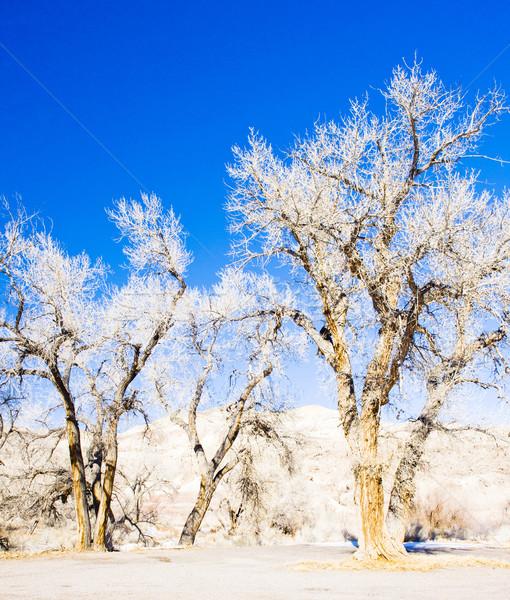 冬 木 ユタ州 米国 自然 雪 ストックフォト © phbcz