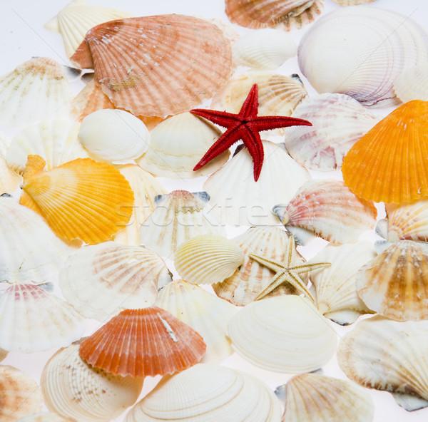 Estrellas de mar fondos objetos conchas Foto stock © phbcz