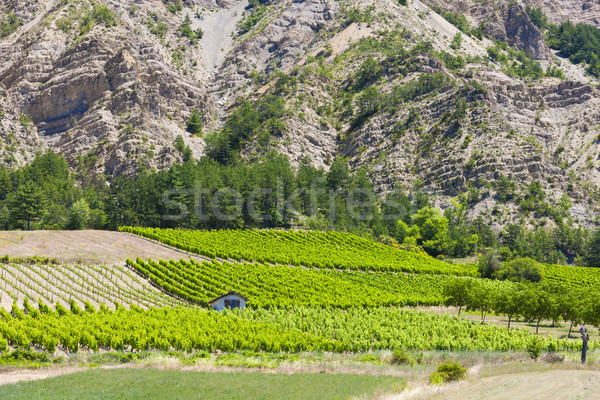vineyards, Drome Department, Rhone-Alpes, France Stock photo © phbcz