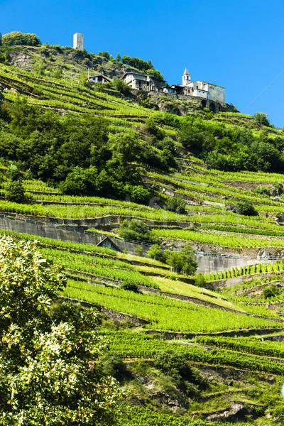 vineyars near San Giacomo Sudovest, Lombardy, Italy Stock photo © phbcz