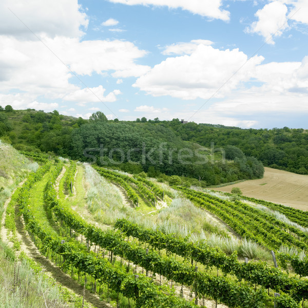 vineyards, Eko Hnizdo, Czech Republic Stock photo © phbcz