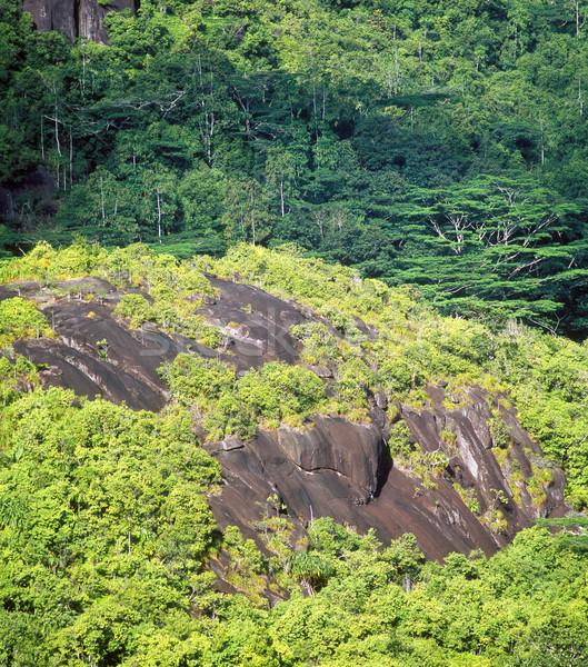 forest, Mah Stock photo © phbcz