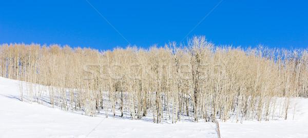 Winter Utah USA bos landschap sneeuw Stockfoto © phbcz