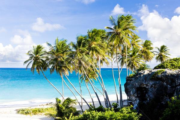 Stockfoto: Bodem · Barbados · caribbean · boom · landschap · zee