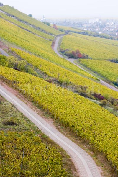 vineyards near Schwabsburg, Rheinland, Germany Stock photo © phbcz