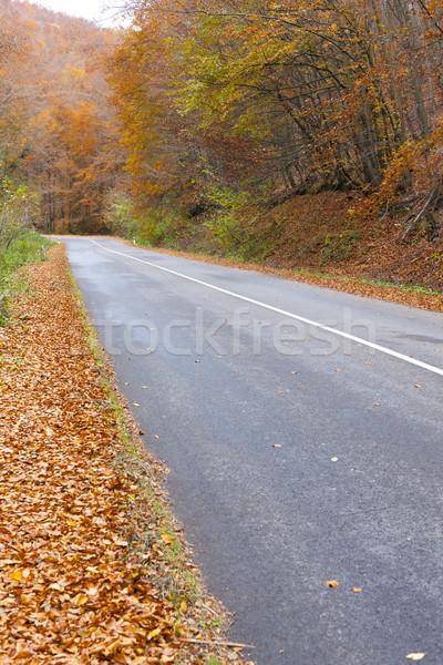 Lege weg najaar Slowakije bos Europa Stockfoto © phbcz