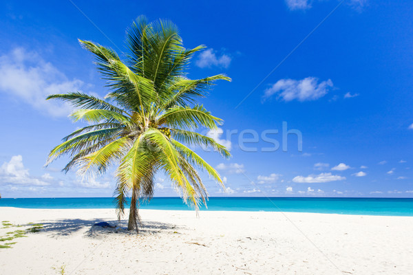 Barbade Caraïbes arbre paysage mer Palm Photo stock © phbcz
