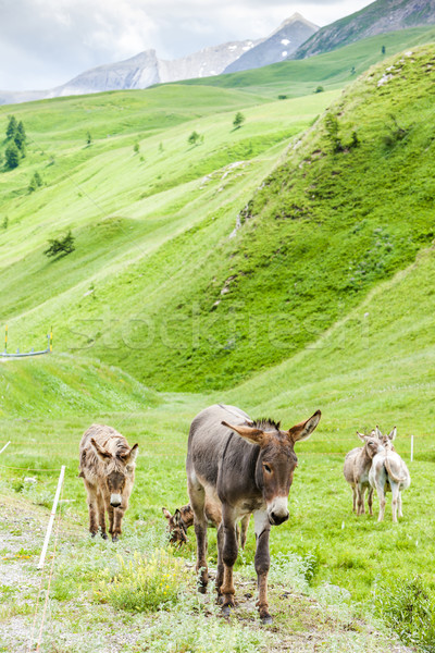 Landschap frans Italië natuur bergen Stockfoto © phbcz