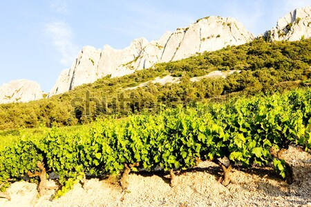 vineyards near Gigondas at Col Du Cayron, Provence, France Stock photo © phbcz