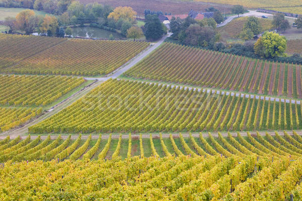 vineyards near Johannisberg Palace, Hessen, Germany Stock photo © phbcz