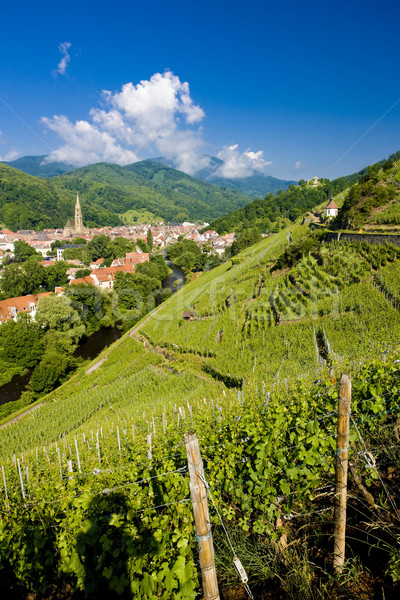 grand cru vineyard, Thann, Alsace, France Stock photo © phbcz