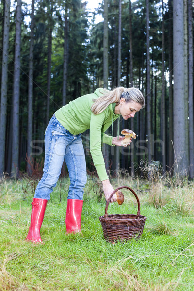 mushroom picking woman Stock photo © phbcz