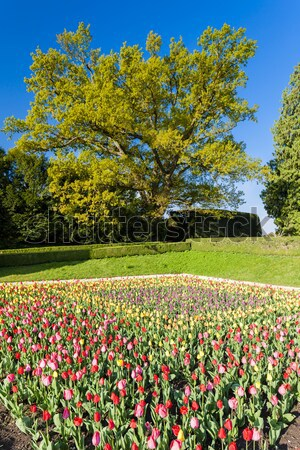 Tuin paleis Polen bloem plant buitenshuis Stockfoto © phbcz
