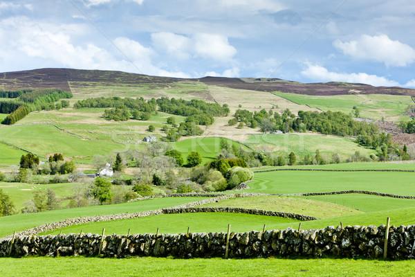 Hoogland Schotland landschap groene weide natuurlijke Stockfoto © phbcz