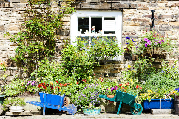 house with plants in Blanchland, Northumberland, England Stock photo © phbcz