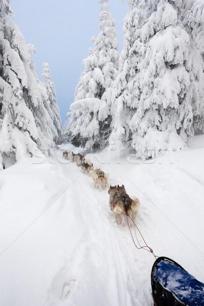 Trenó longo República Checa natureza neve corrida Foto stock © phbcz