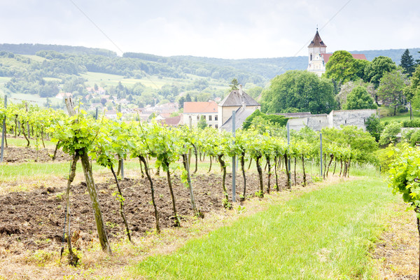 vineyard at Falkenstein, Lower Austria, Austria Stock photo © phbcz