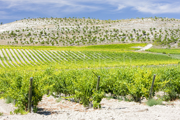 vineyards near Villabanez, Valladolid Province, Castile and Leon Stock photo © phbcz