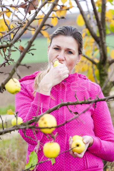 Stok fotoğraf: Kadın · sonbahar · elma · ağacı · yeme · elma · gıda