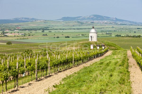 Kápolna szőlőskert Csehország természet építészet növény Stock fotó © phbcz