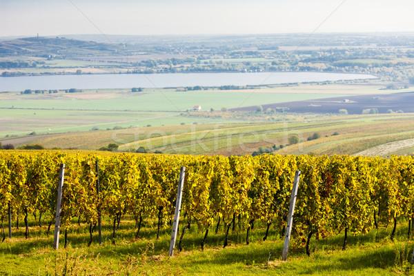 Tsjechische Republiek natuur najaar land Stockfoto © phbcz