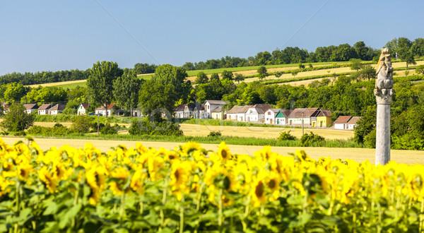 Vino girasole campo abbassare Austria architettura Foto d'archivio © phbcz