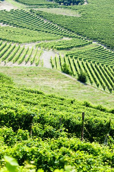 Stockfoto: Italië · natuur · achtergrond · land · wijnstok · natuurlijke