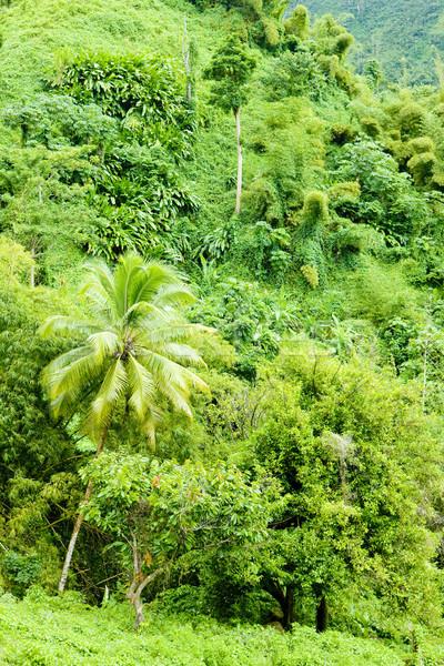 Stock photo: inland of Grenada, Caribbean