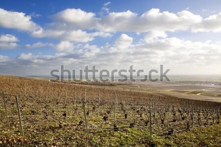Szampana region Francja krajobraz podróży Europie Zdjęcia stock © phbcz