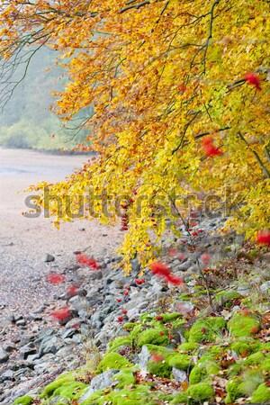 autumnal nature Stock photo © phbcz