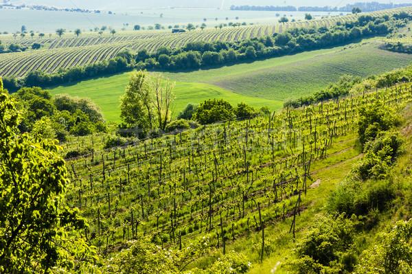 Stock fotó: Kilátás · szőlőskert · régió · Csehország · tájkép · növény