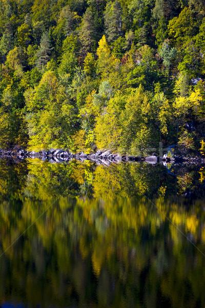 landscape of Southern Norway Stock photo © phbcz